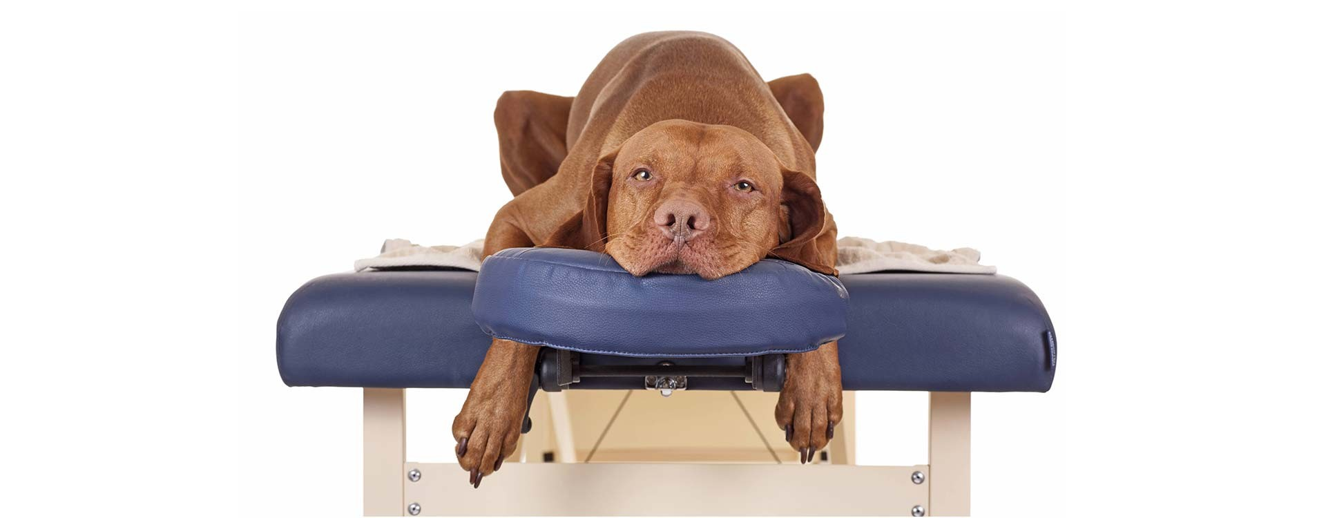Osteopathy for pets