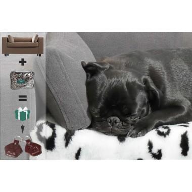 Lit orthopédique pour chien et accessoires