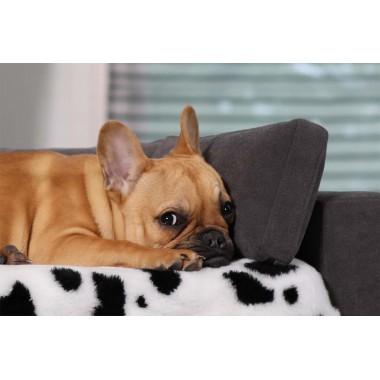 Lit douillet pour chien avec matelas orthopédique