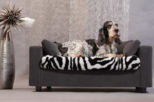 luxury dog relax