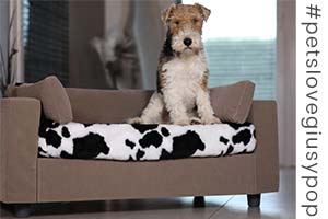 Design dog sofa