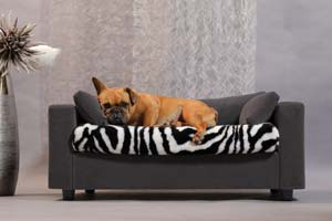 Luxurious Bulldog Bed