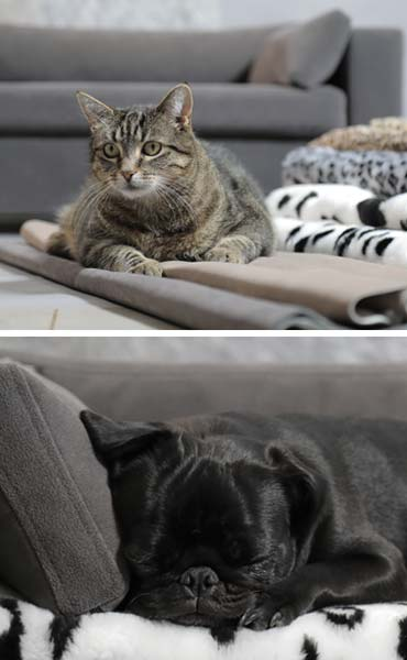 Pet sofa design and comfort