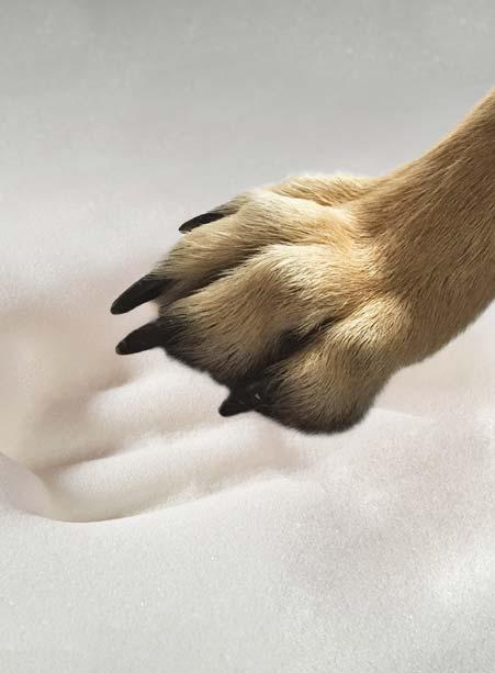 matelas chien arthrite