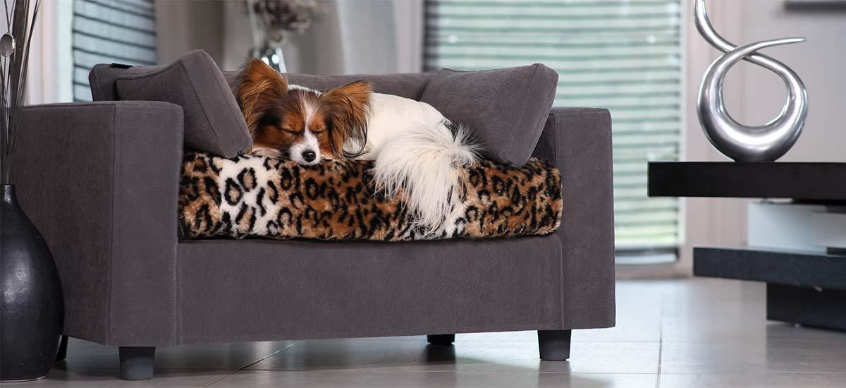 canapé pour chiens avec matelas orthopédique