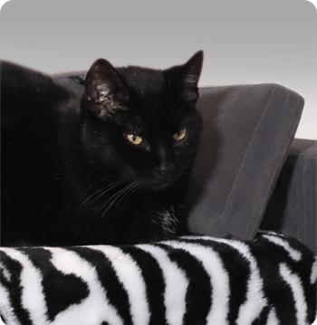 chat plaid confort