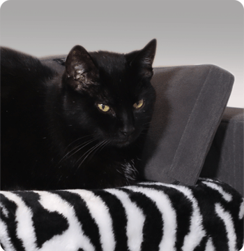 plaid gatti cani comodo