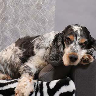 Canapé luxe pour chien Design Confort