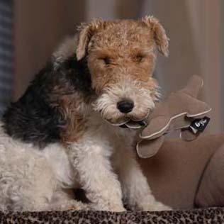 Canapé pour chien de luxe avec matelas orthopédique