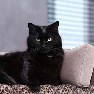 Lit pour chat et chien avec coussin orthopédique
