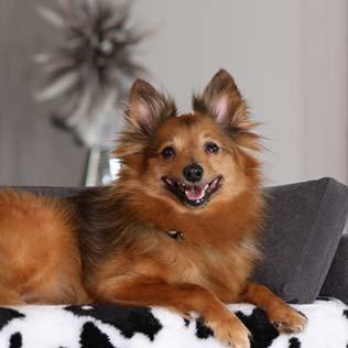 Canapé de luxe pour petits chiens Original Orthopédique