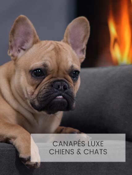 Lit design pour chien Giusypop
