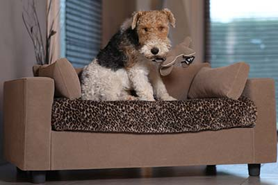 pet sofa with blanket and toy