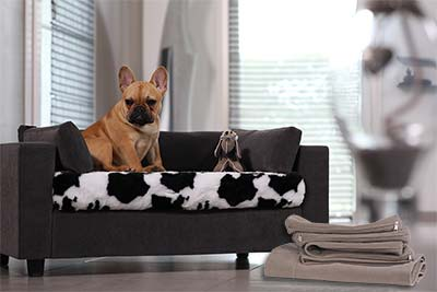 pet bed chic and design