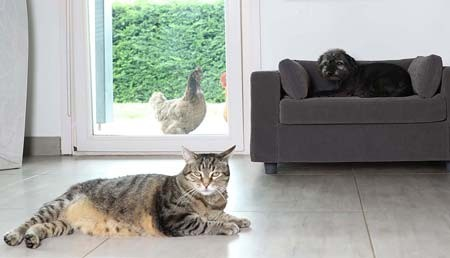Which location to choose for the sofa for your dog or cat