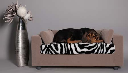 What kind of sofa for your dog or cat?